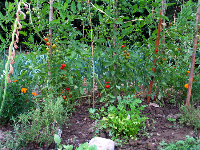 St. Louis springs into gardening